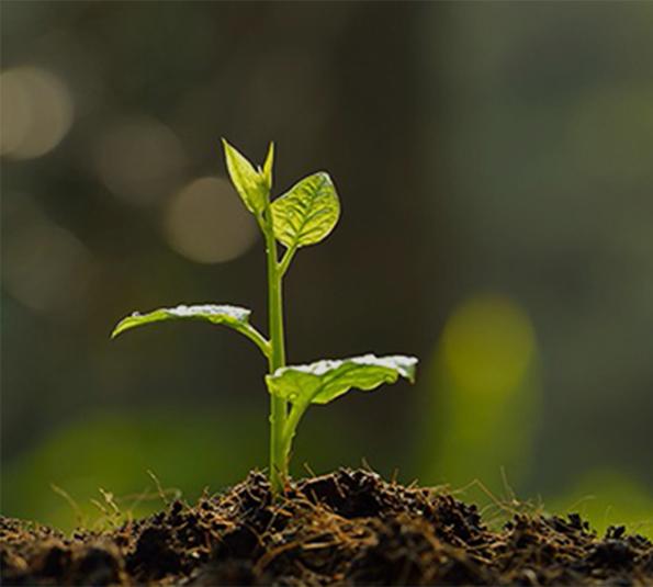 土壤及地下水调查与修复