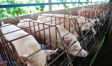 沭阳新六农牧科技有限公司章集街道年出栏20万头仔猪项目环境影响评价公众参与第二次公示