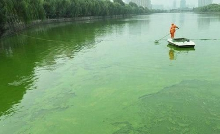 亭湖区2020年度市区城北地区治河活水项目
