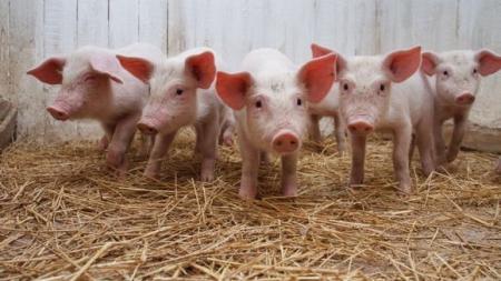 淮安温氏畜牧有限公司严岗猪场改扩建项目环境影响评价公众参与公示第二次公示